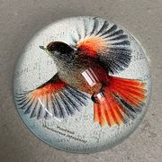 Crystal Paperweight, Siberian Jay